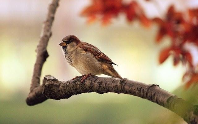 bird-9950_640